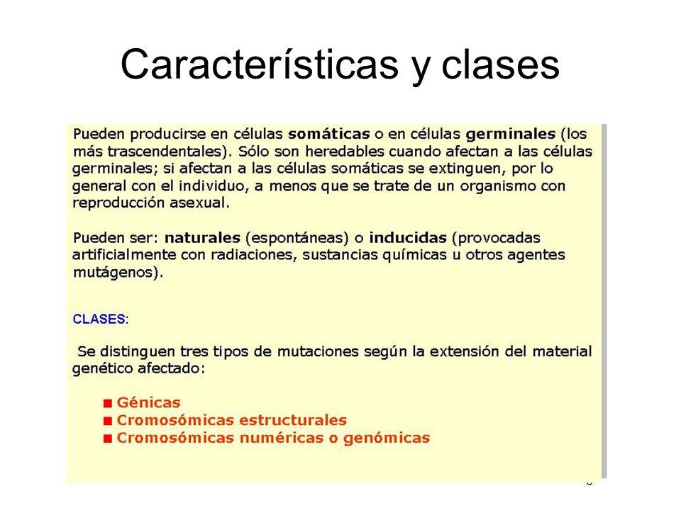 Características y clases