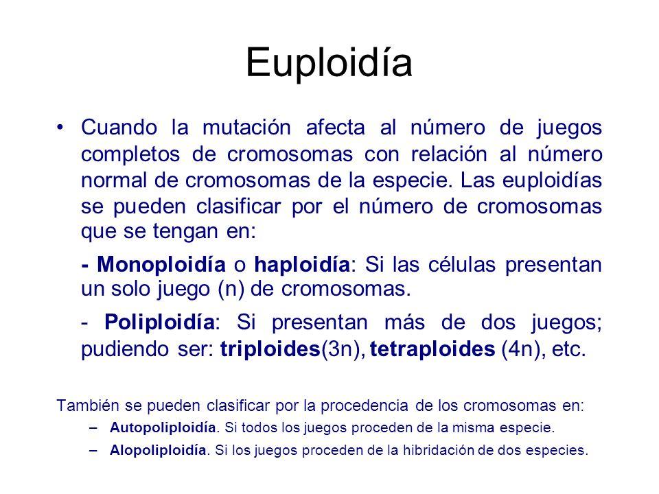 Euploidía
