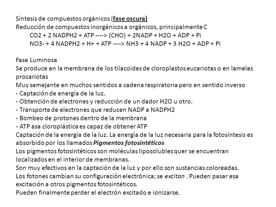 CO2 + 2 NADPH2 + ATP ----> (CHO) + 2NADP + H2O + ADP + Pi