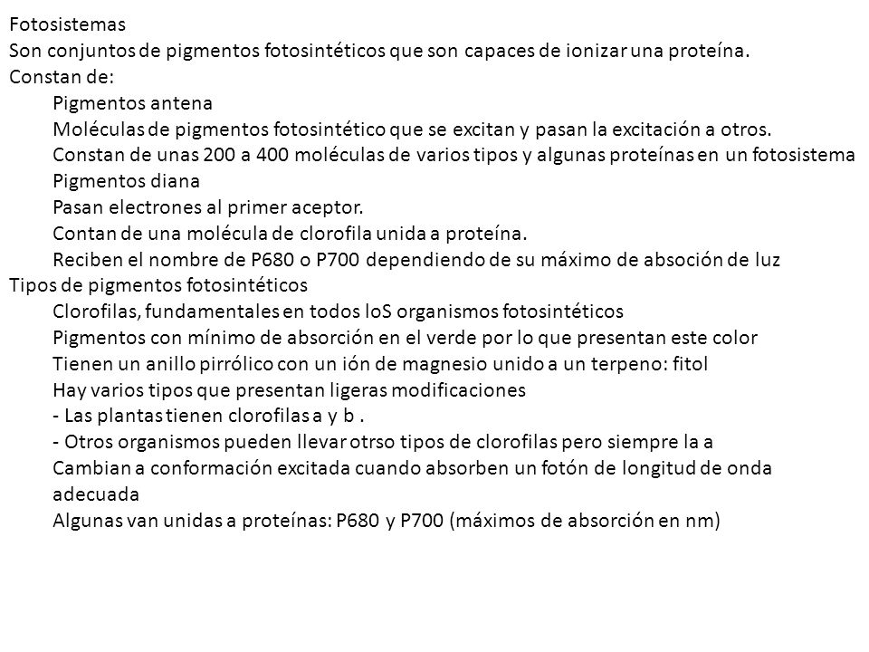 Tipos de pigmentos fotosintéticos
