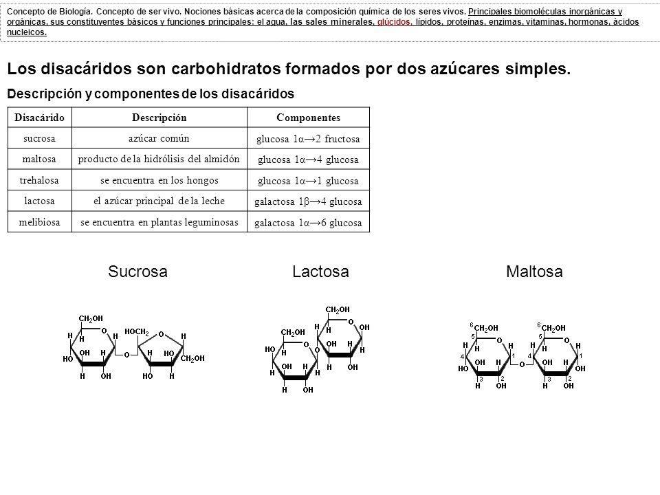 Los disacáridos son carbohidratos formados por dos azúcares simples.