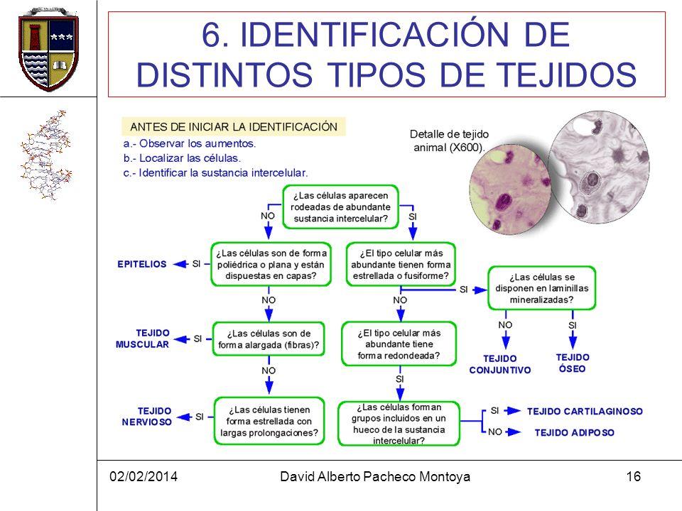 6. IDENTIFICACIÓN DE DISTINTOS TIPOS DE TEJIDOS