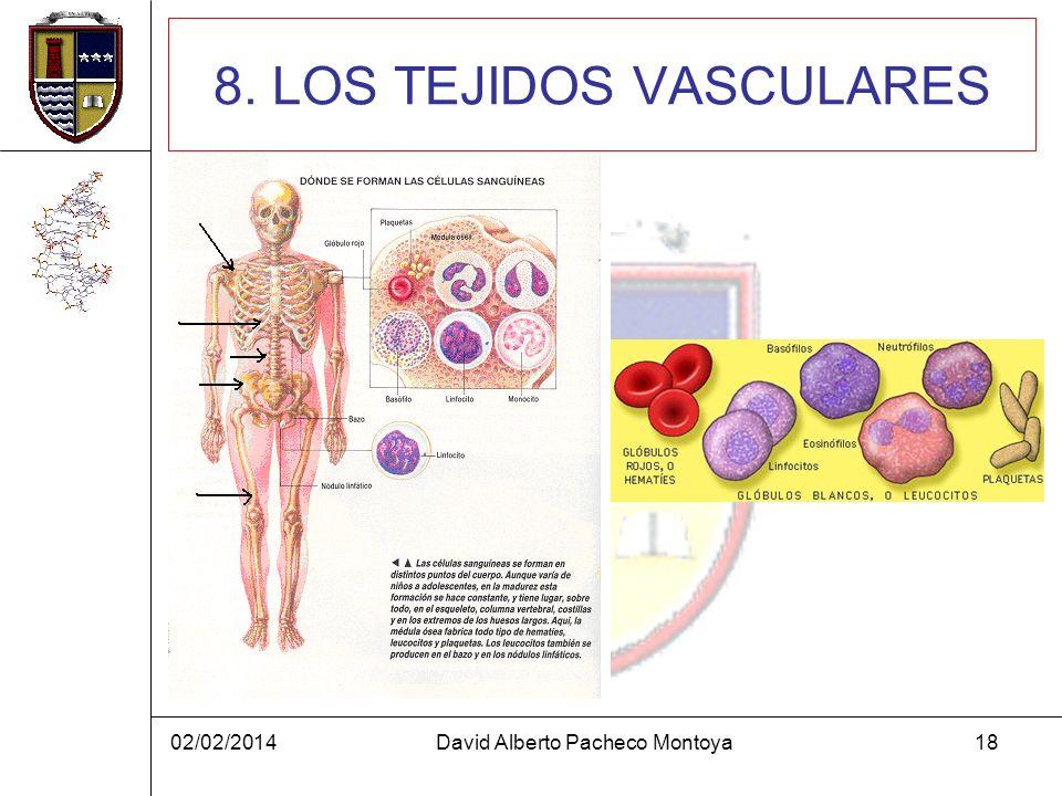 8. LOS TEJIDOS VASCULARES