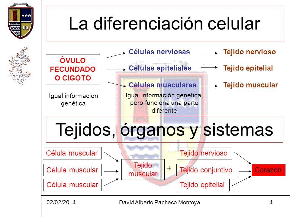 La diferenciación celular