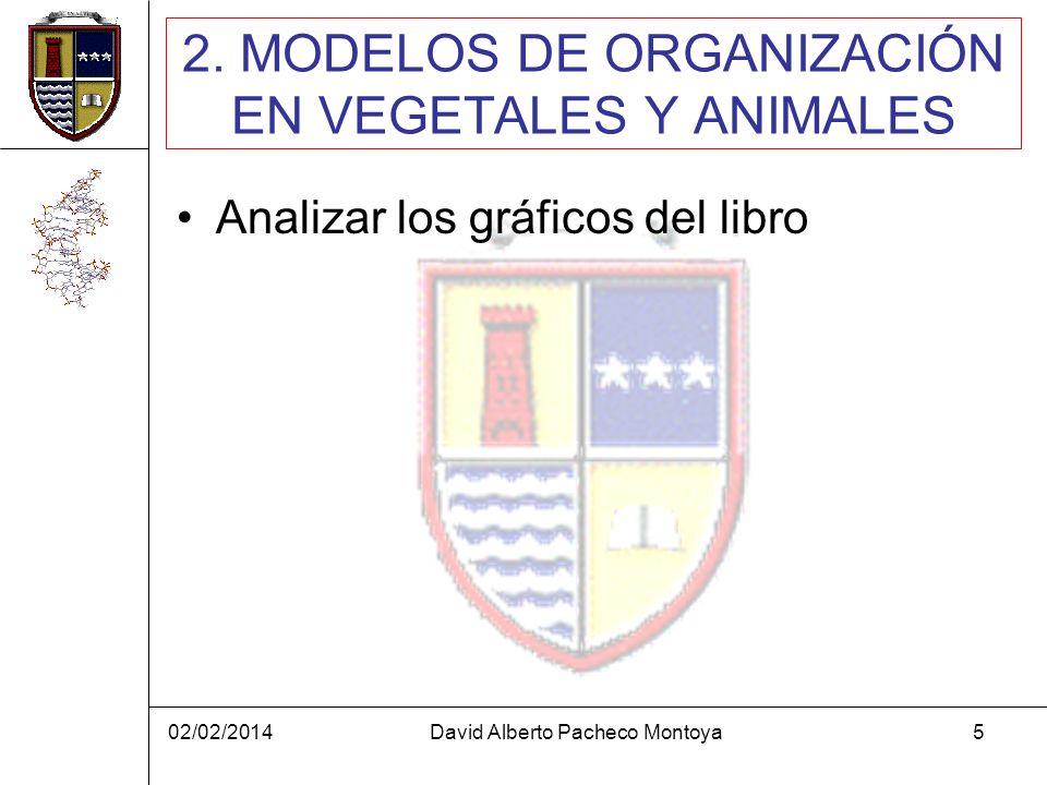 2. MODELOS DE ORGANIZACIÓN EN VEGETALES Y ANIMALES