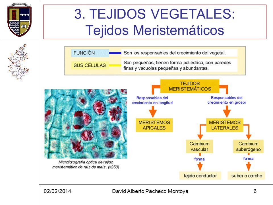 3. TEJIDOS VEGETALES: Tejidos Meristemáticos