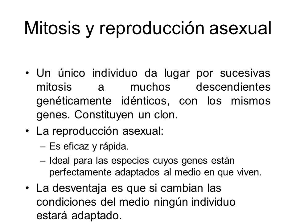 Mitosis y reproducción asexual
