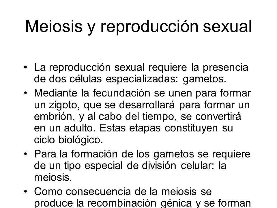 Meiosis y reproducción sexual