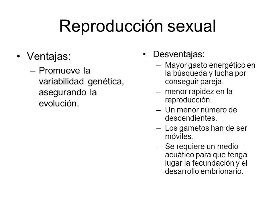 Reproducción sexual Ventajas: Desventajas: