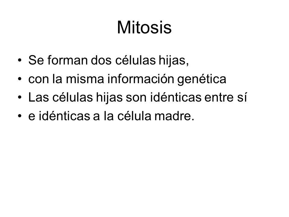 Mitosis Se forman dos células hijas, con la misma información genética