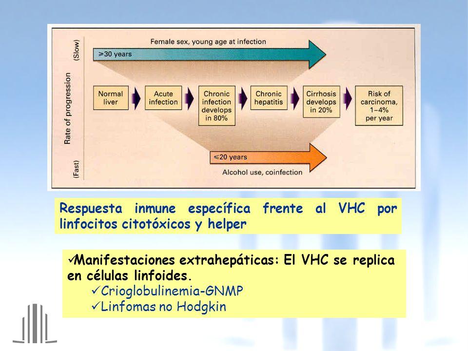 Respuesta inmune específica frente al VHC por linfocitos citotóxicos y helper