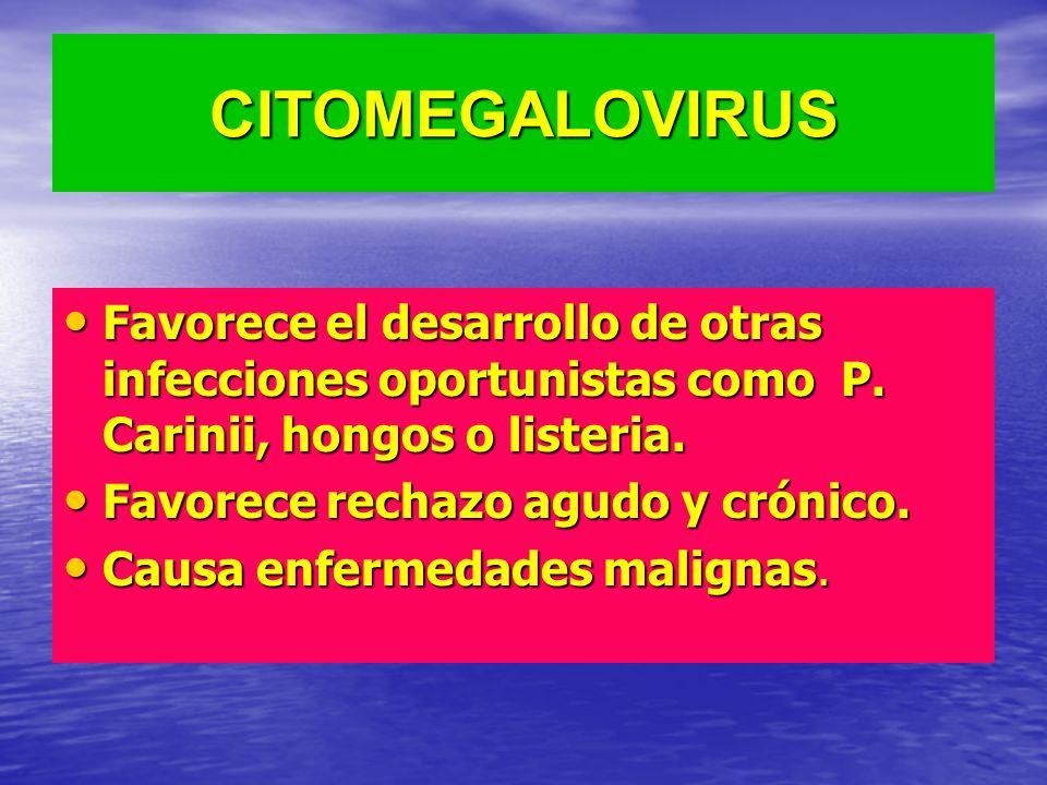 CITOMEGALOVIRUS Favorece el desarrollo de otras infecciones oportunistas como P. Carinii, hongos o listeria.