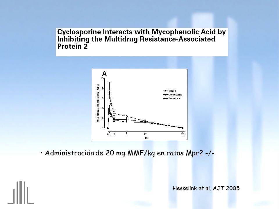 Administración de 20 mg MMF/kg en ratas Mpr2 -/-