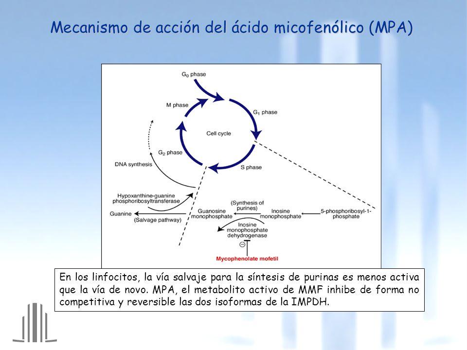 Mecanismo de acción del ácido micofenólico (MPA)
