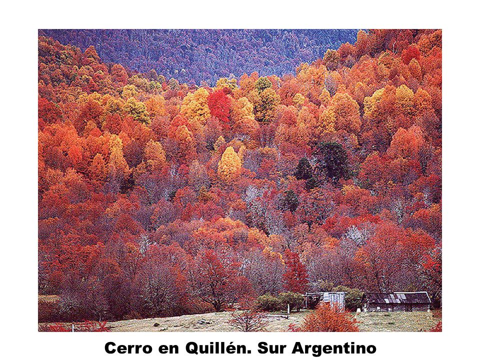 Cerro en Quillén. Sur Argentino