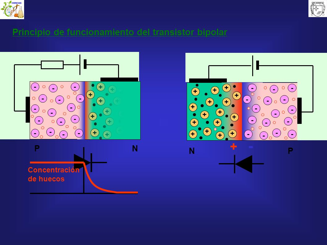 + - Principio de funcionamiento del transistor bipolar P N N P - - + +