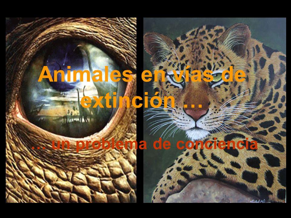 Animales en vías de extinción …