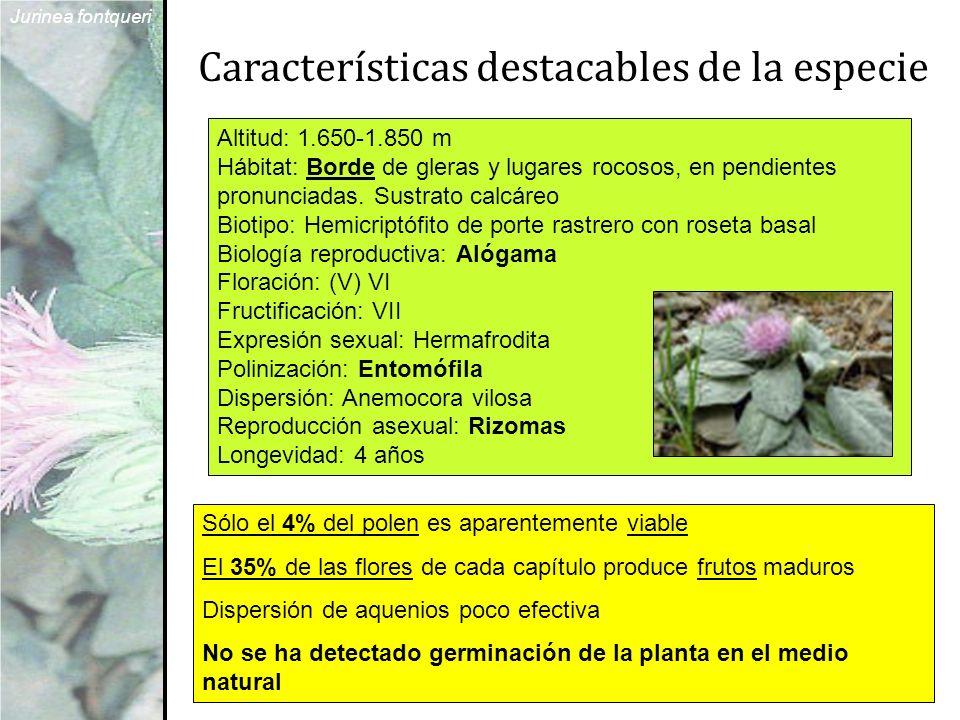 Características destacables de la especie