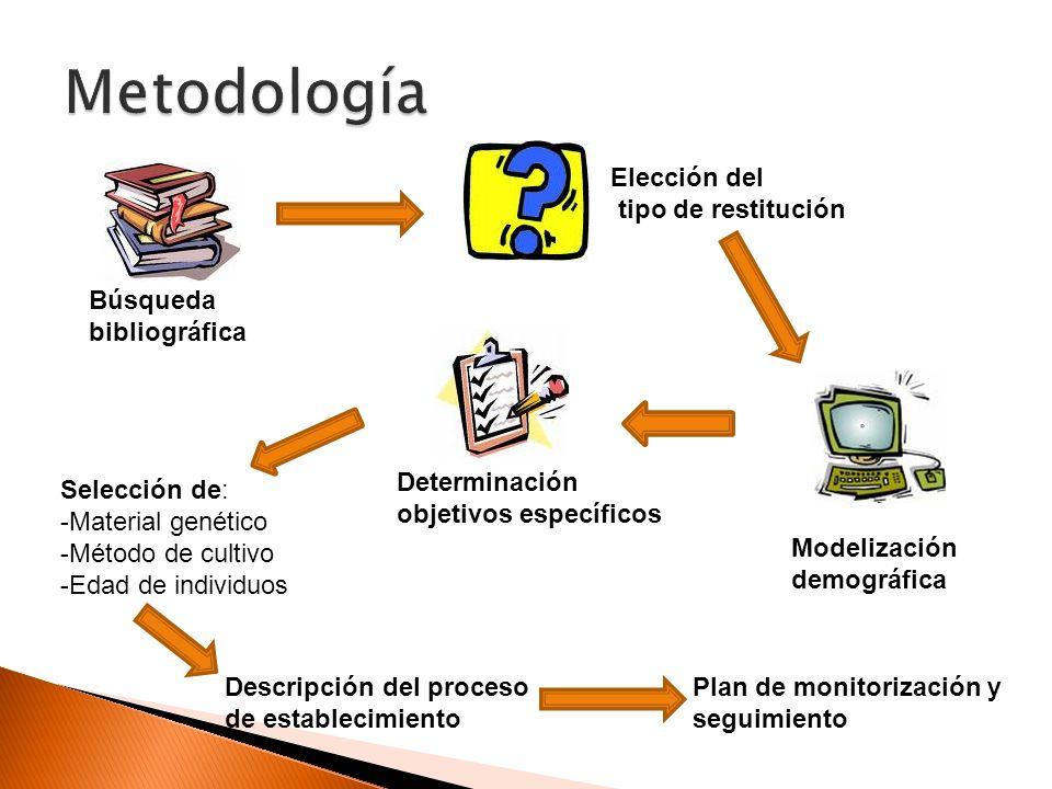 Metodología Elección del tipo de restitución Búsqueda bibliográfica