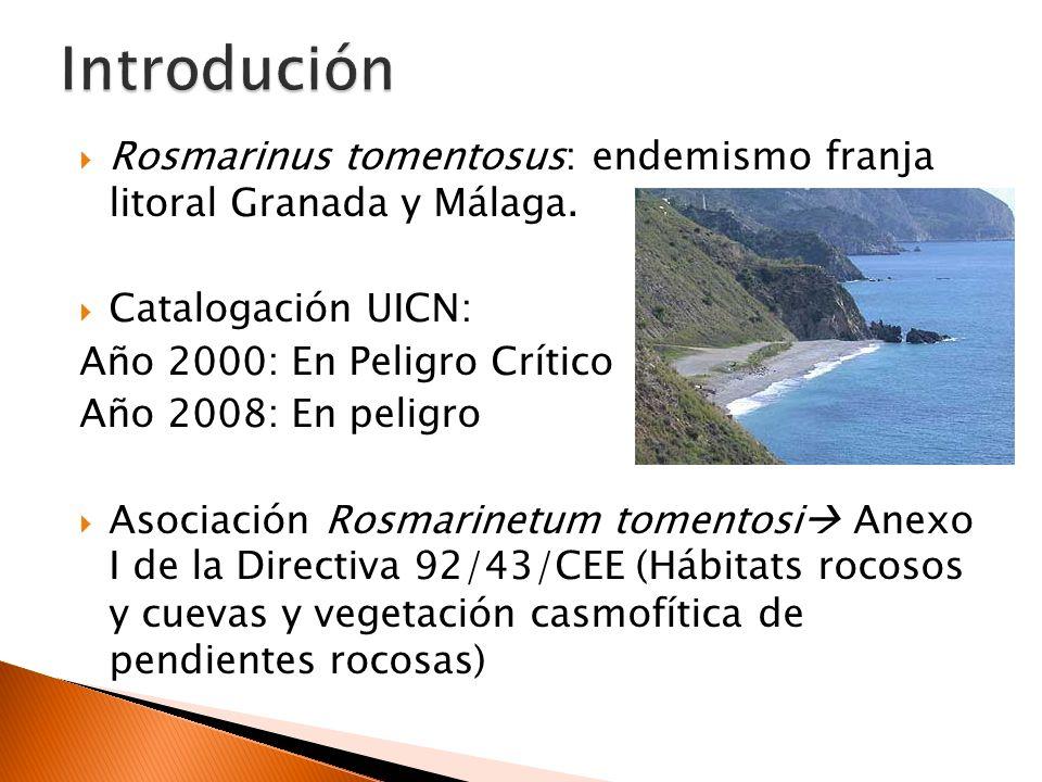 Introdución Rosmarinus tomentosus: endemismo franja litoral Granada y Málaga. Catalogación UICN: Año 2000: En Peligro Crítico.