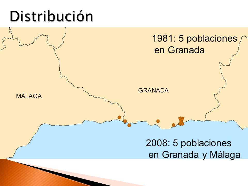 Distribución 1981: 5 poblaciones en Granada 2008: 5 poblaciones