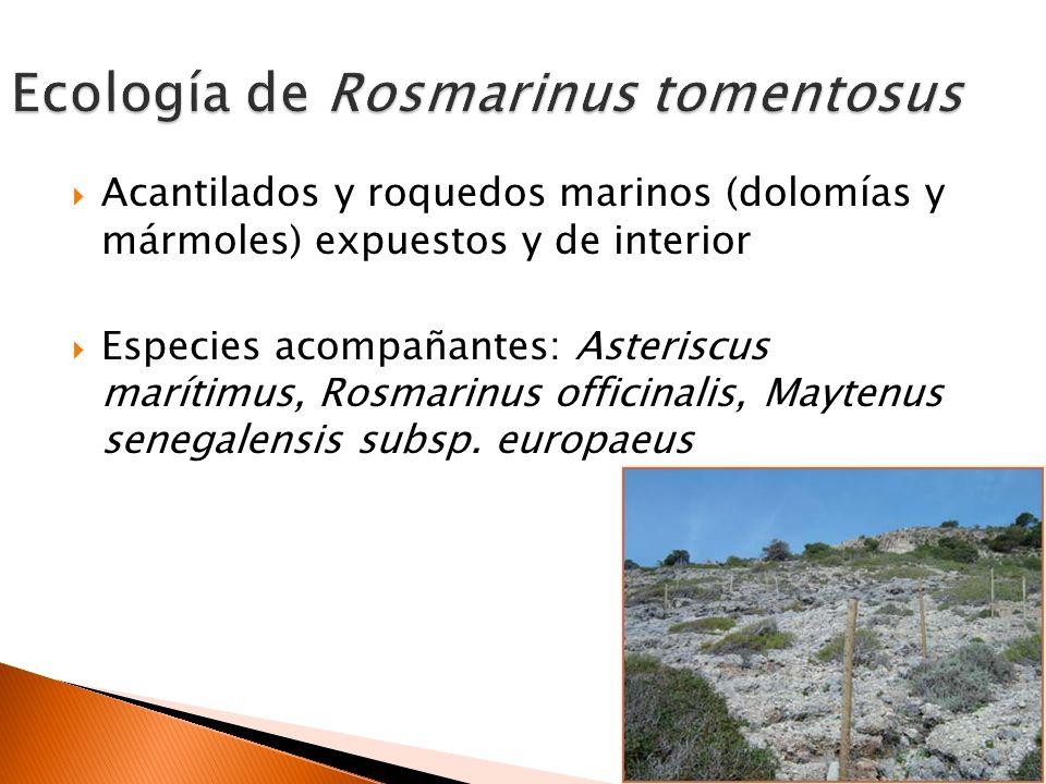 Ecología de Rosmarinus tomentosus