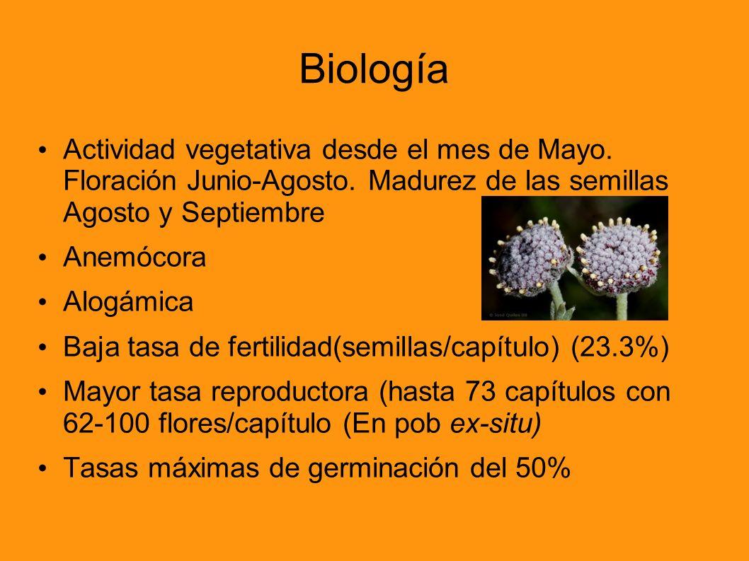 Biología Actividad vegetativa desde el mes de Mayo. Floración Junio-Agosto. Madurez de las semillas Agosto y Septiembre.