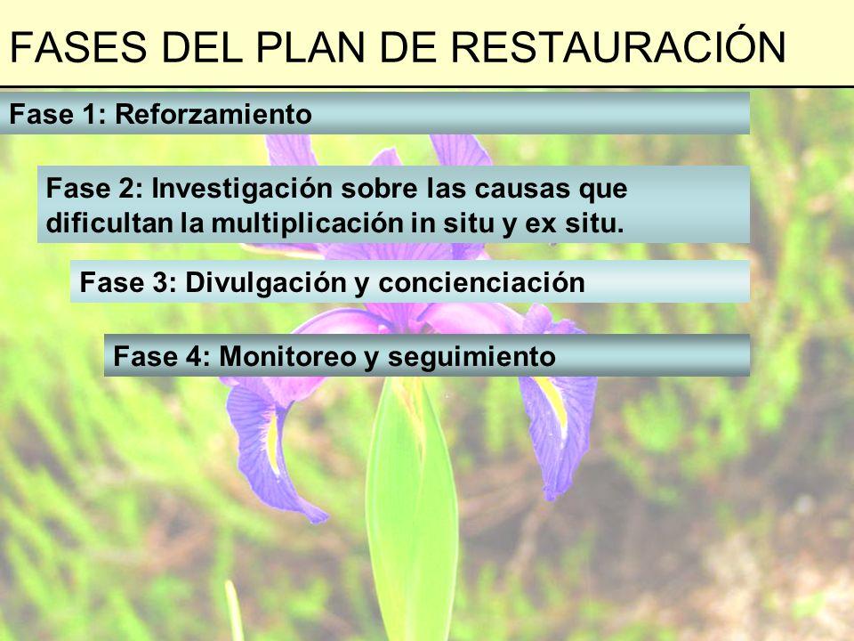 FASES DEL PLAN DE RESTAURACIÓN