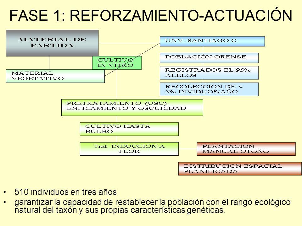 FASE 1: REFORZAMIENTO-ACTUACIÓN