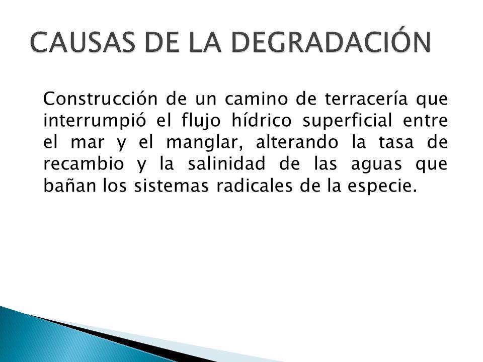 CAUSAS DE LA DEGRADACIÓN