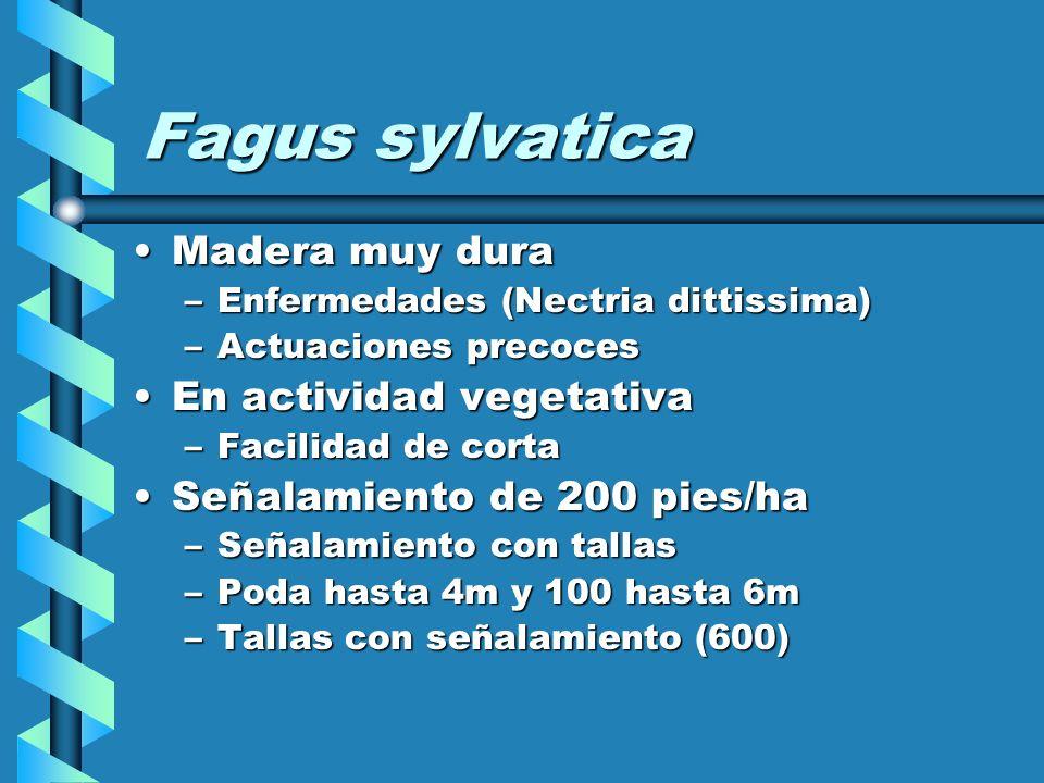Fagus sylvatica Madera muy dura En actividad vegetativa
