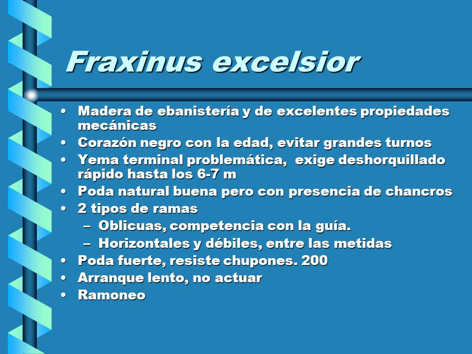 Fraxinus excelsior Madera de ebanistería y de excelentes propiedades mecánicas. Corazón negro con la edad, evitar grandes turnos.