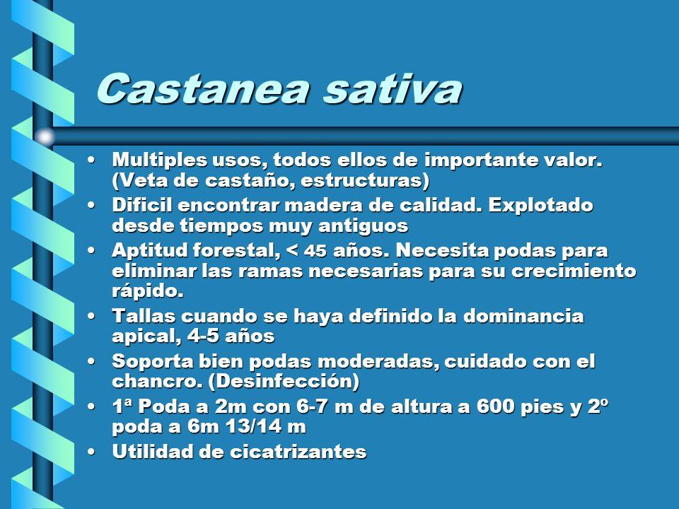 Castanea sativaMultiples usos, todos ellos de importante valor. (Veta de castaño, estructuras)