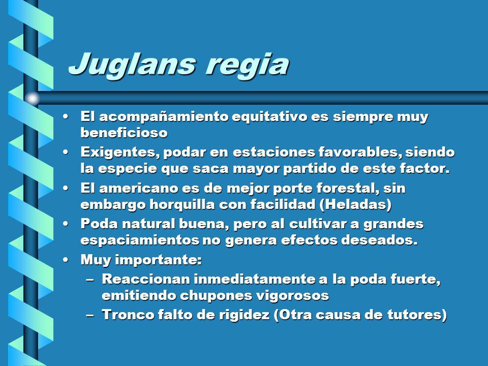 Juglans regia El acompañamiento equitativo es siempre muy beneficioso