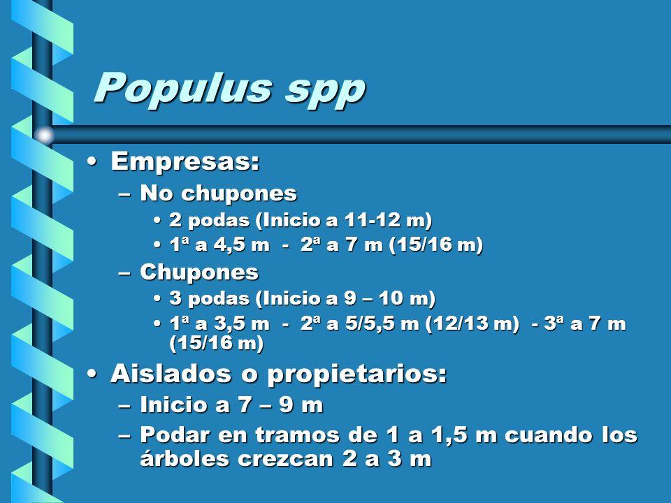 Populus spp Empresas: Aislados o propietarios: No chupones Chupones
