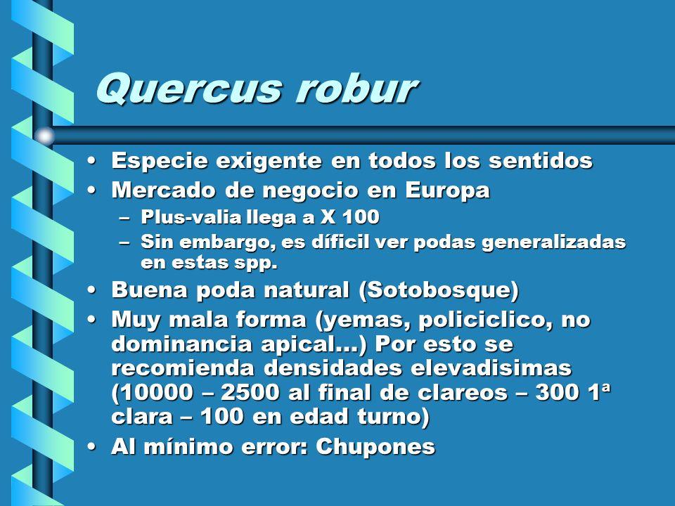 Quercus robur Especie exigente en todos los sentidos