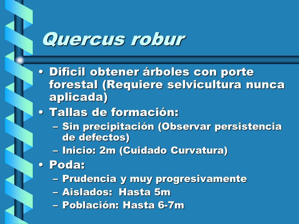 Quercus roburDificil obtener árboles con porte forestal (Requiere selvicultura nunca aplicada) Tallas de formación: