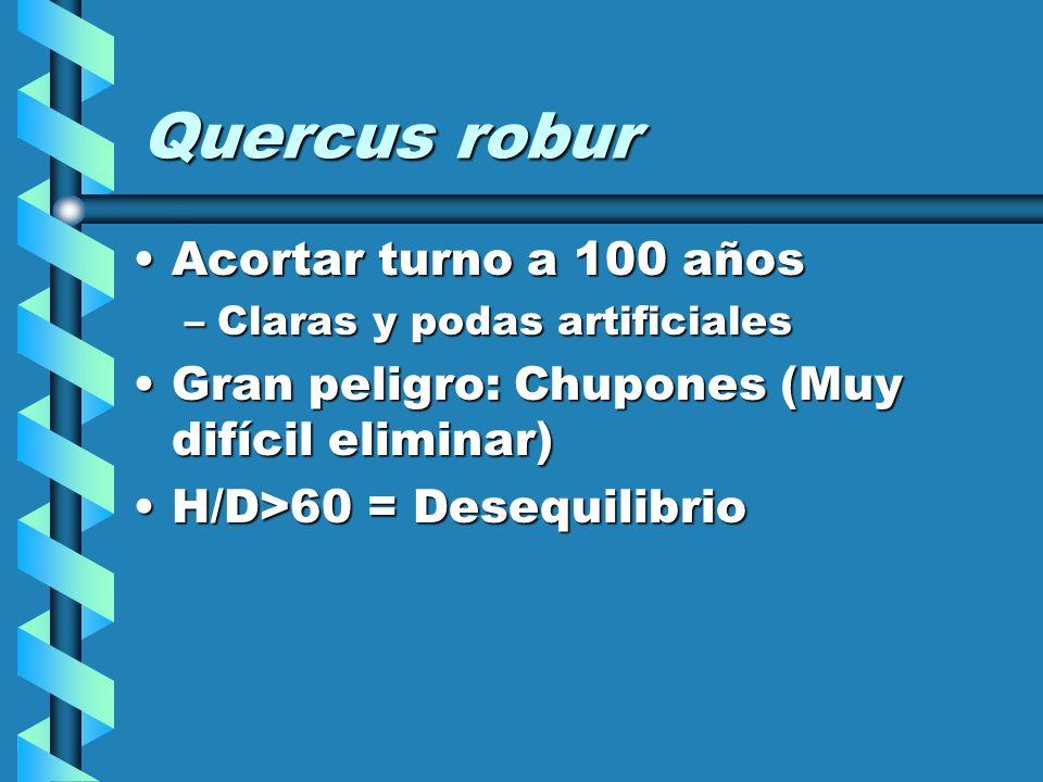 Quercus robur Acortar turno a 100 años