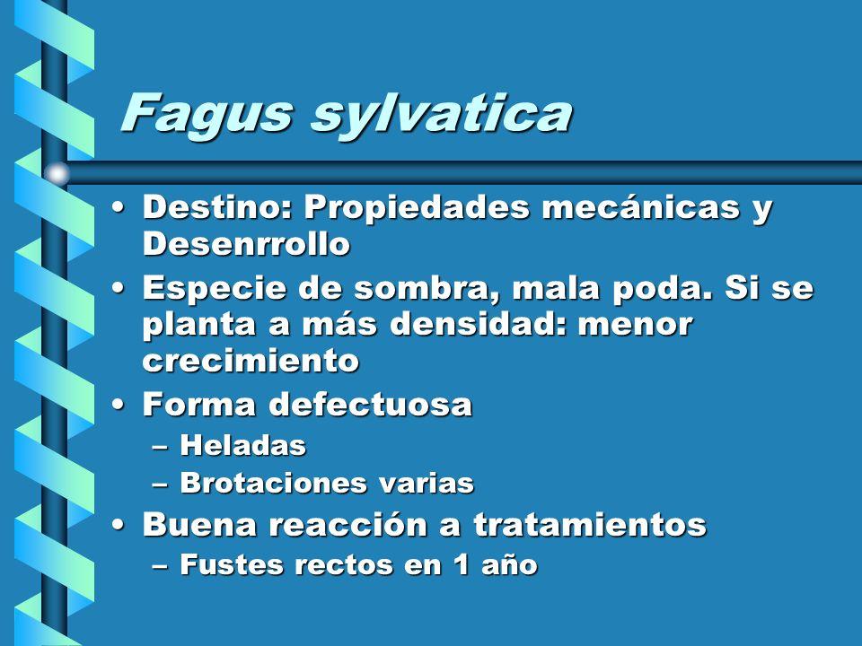 Fagus sylvatica Destino: Propiedades mecánicas y Desenrrollo