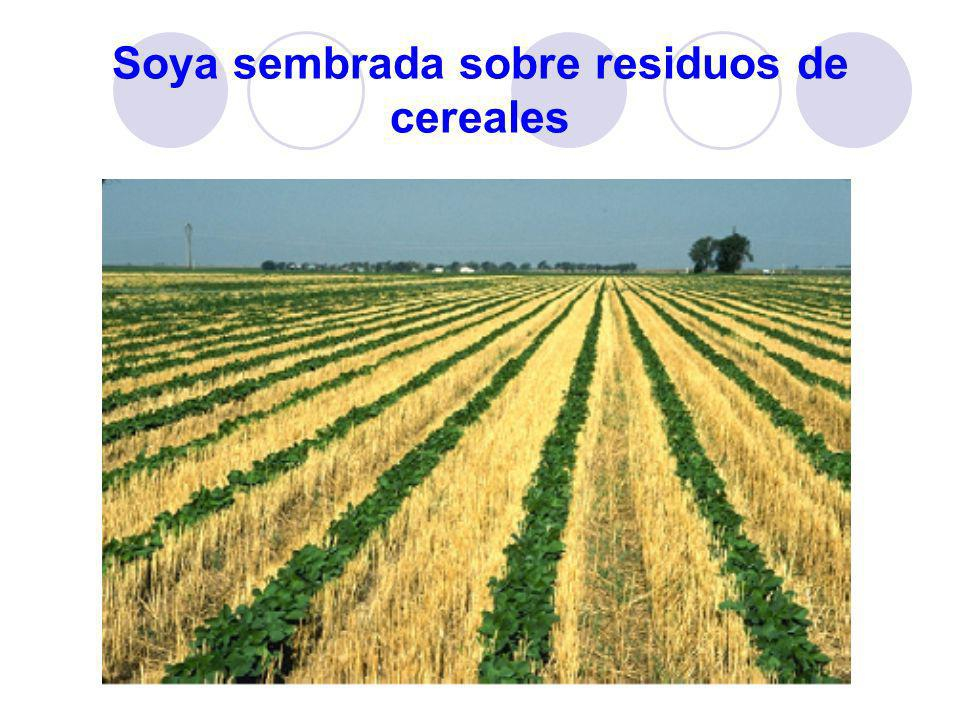 Soya sembrada sobre residuos de cereales