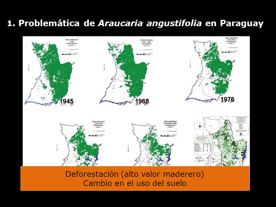 1. Problemática de Araucaria angustifolia en Paraguay