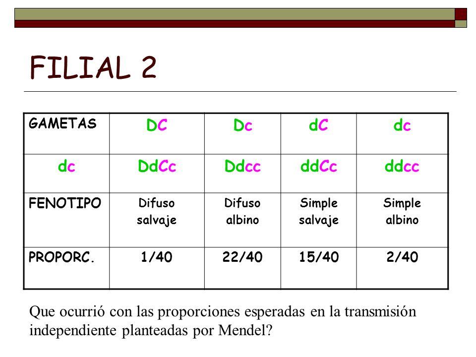 FILIAL 2 DC Dc dC dc DdCc Ddcc ddCc ddcc