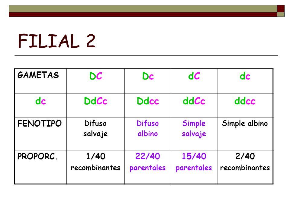 FILIAL 2 DC Dc dC dc DdCc Ddcc ddCc ddcc GAMETAS FENOTIPO PROPORC.