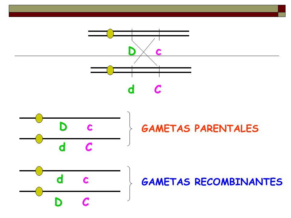 D c d C GAMETAS PARENTALES D c d C D C d c GAMETAS RECOMBINANTES