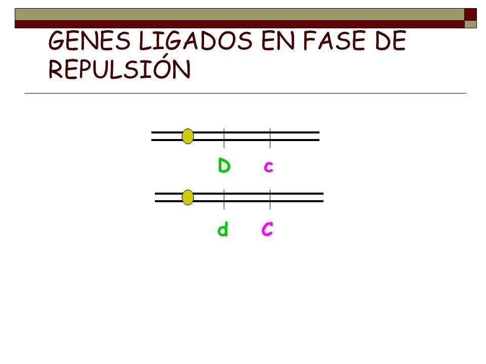 GENES LIGADOS EN FASE DE REPULSIÓN