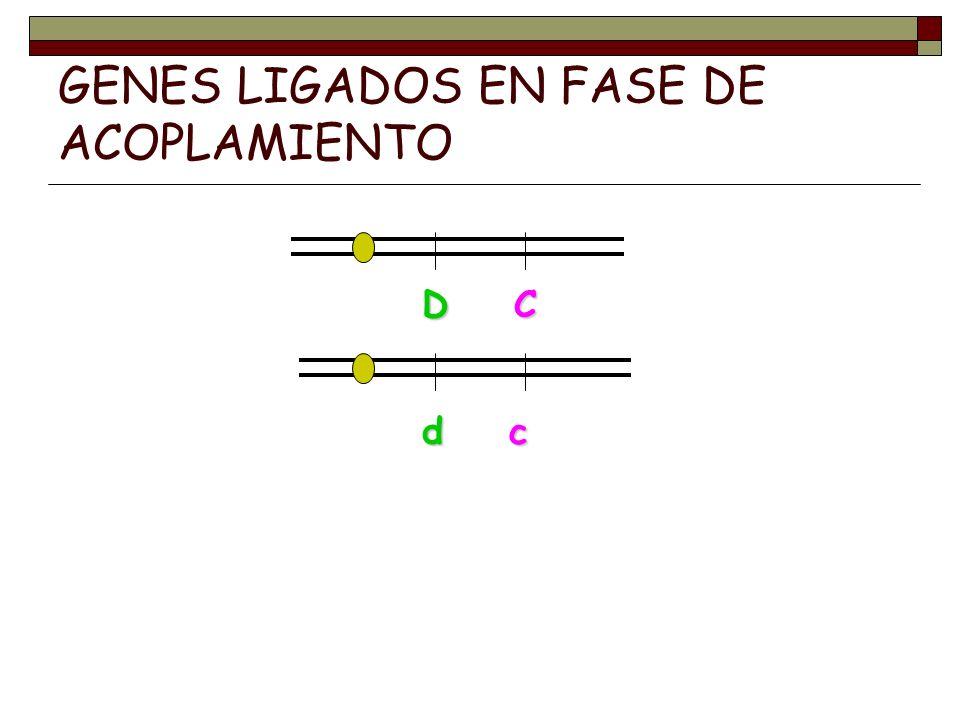GENES LIGADOS EN FASE DE ACOPLAMIENTO