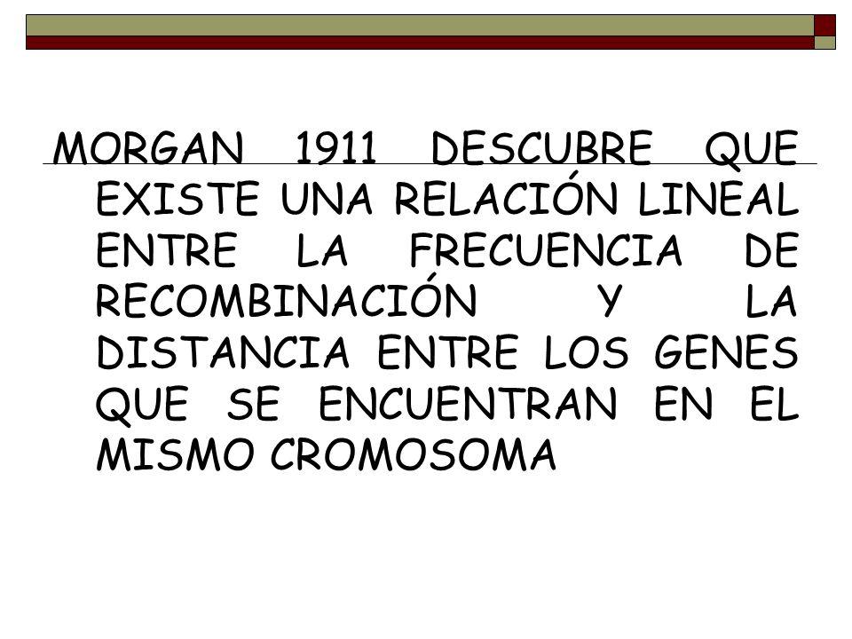 MORGAN 1911 DESCUBRE QUE EXISTE UNA RELACIÓN LINEAL ENTRE LA FRECUENCIA DE RECOMBINACIÓN Y LA DISTANCIA ENTRE LOS GENES QUE SE ENCUENTRAN EN EL MISMO CROMOSOMA