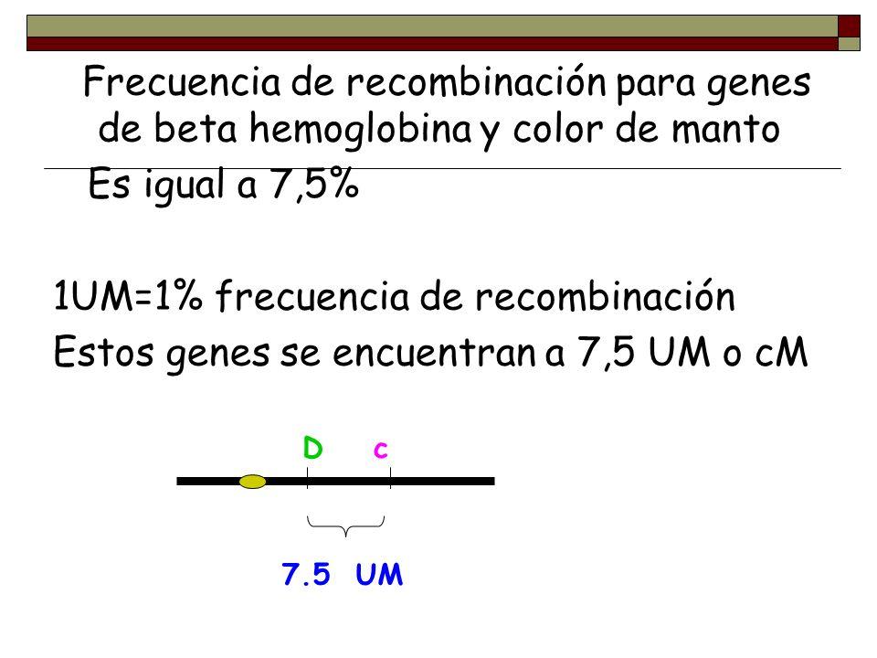 1UM=1% frecuencia de recombinación