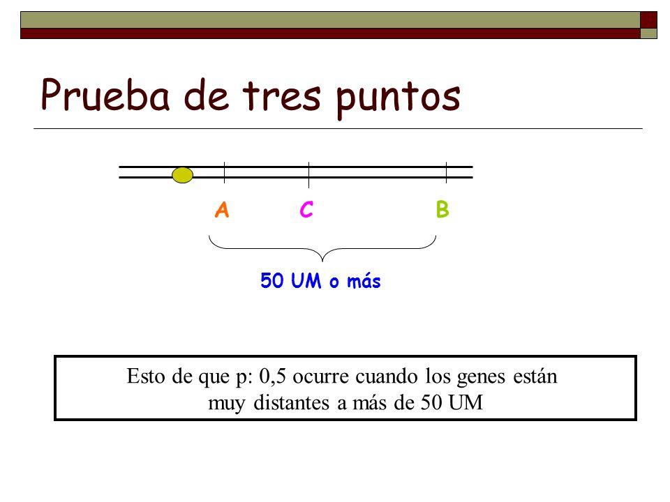 Prueba de tres puntos A B C