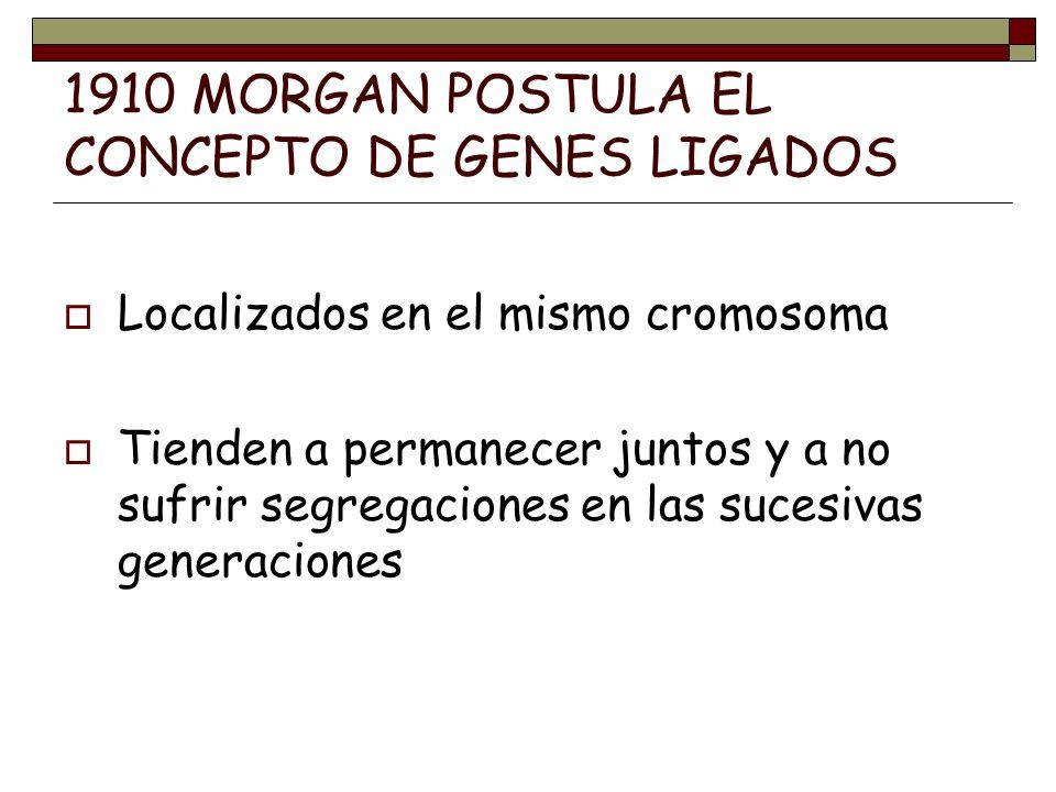 1910 MORGAN POSTULA EL CONCEPTO DE GENES LIGADOS